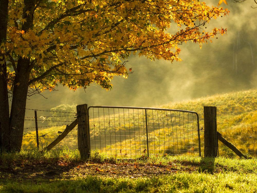 Autumn colours along the roadside in Dorrigo