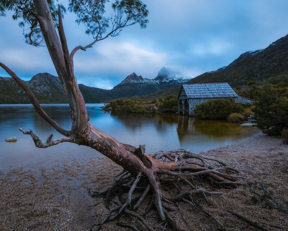 Intertwined -  Dove Lake, Cradle Mountain - Tasmania