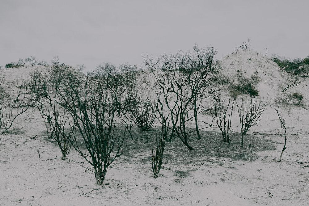 Patrick_Schuttler_Landscape_032.jpg