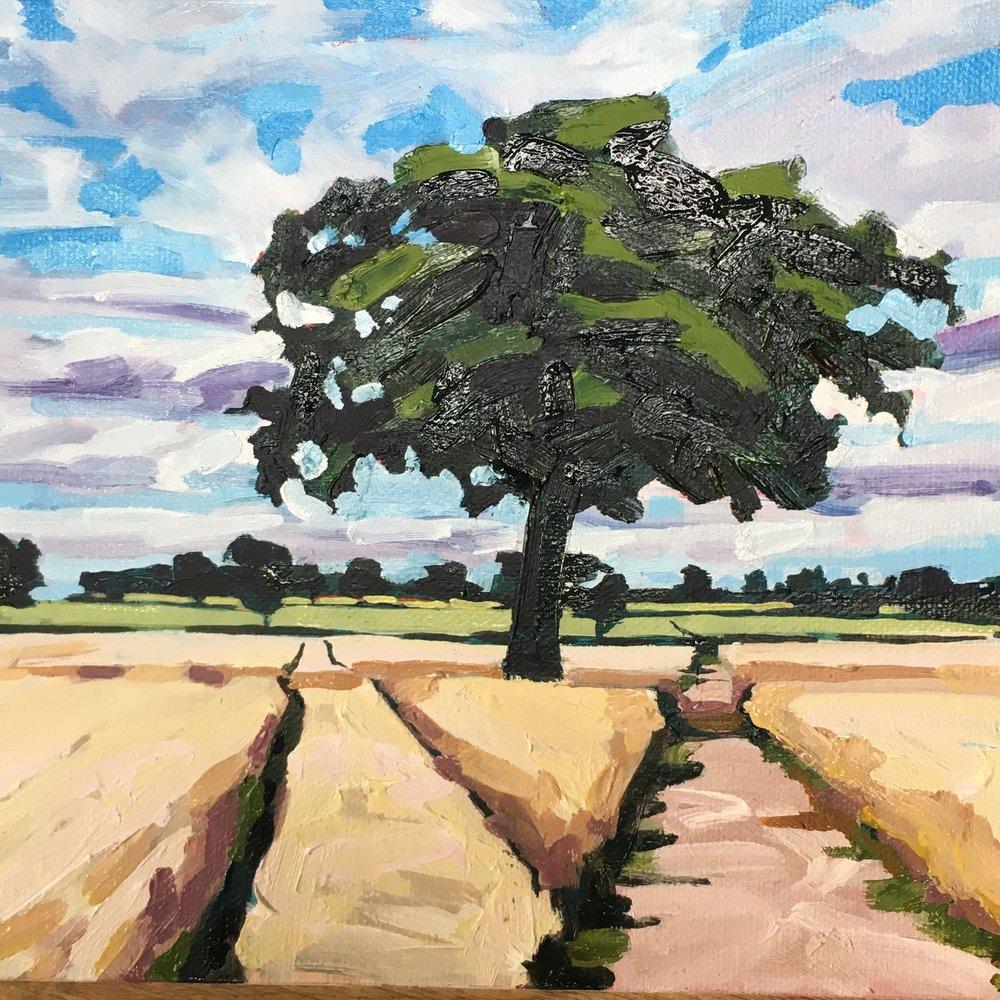 Big tree on the dog walk, Repton, Derbyshire