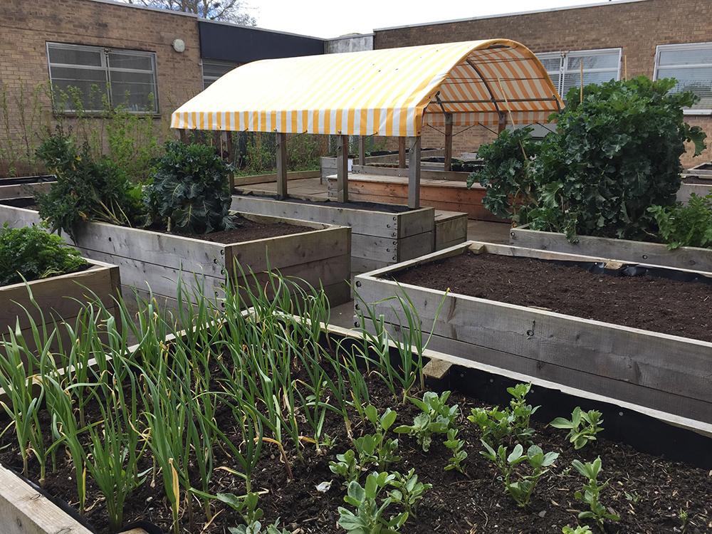 Ardler Community Garden