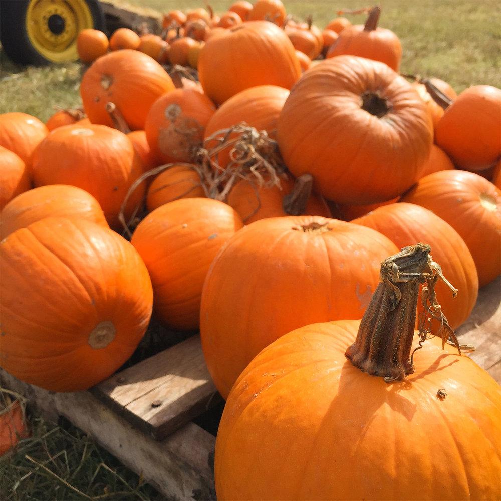 IG_pumpkinpatch.jpg