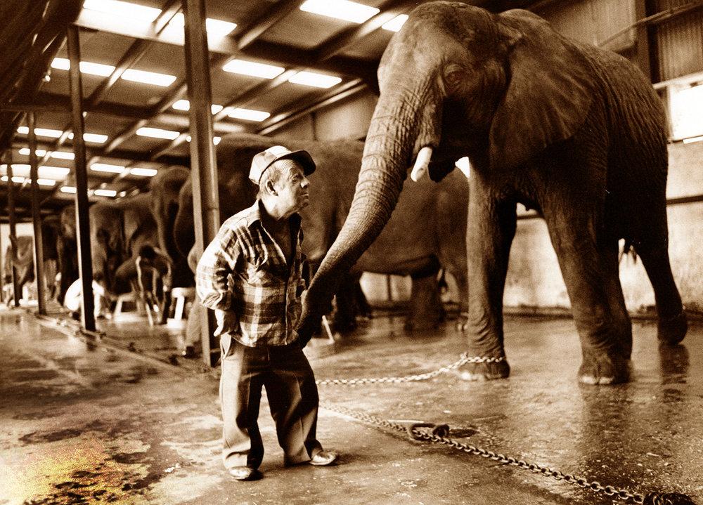 ELEPHANT KEEPER, RINGLING