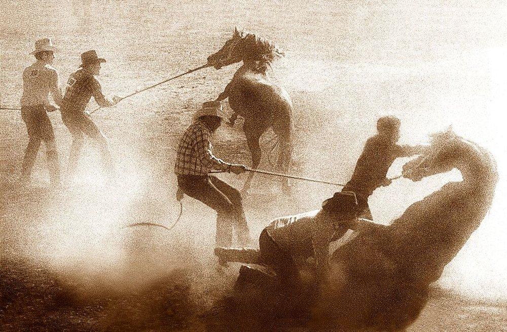 -Wild Horses  Website.jpg