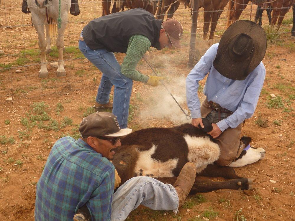 After the work is done everybody meets at the ranch house for lunch.  Nachdem die Arbeit getan ist, treffen sich alle am Ranch Haus zum Mittagessen.