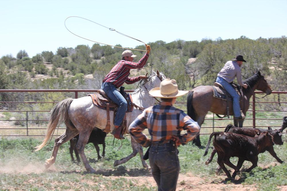 Joel is really good at roping!  Joel ist wirklich ein guter Roper!
