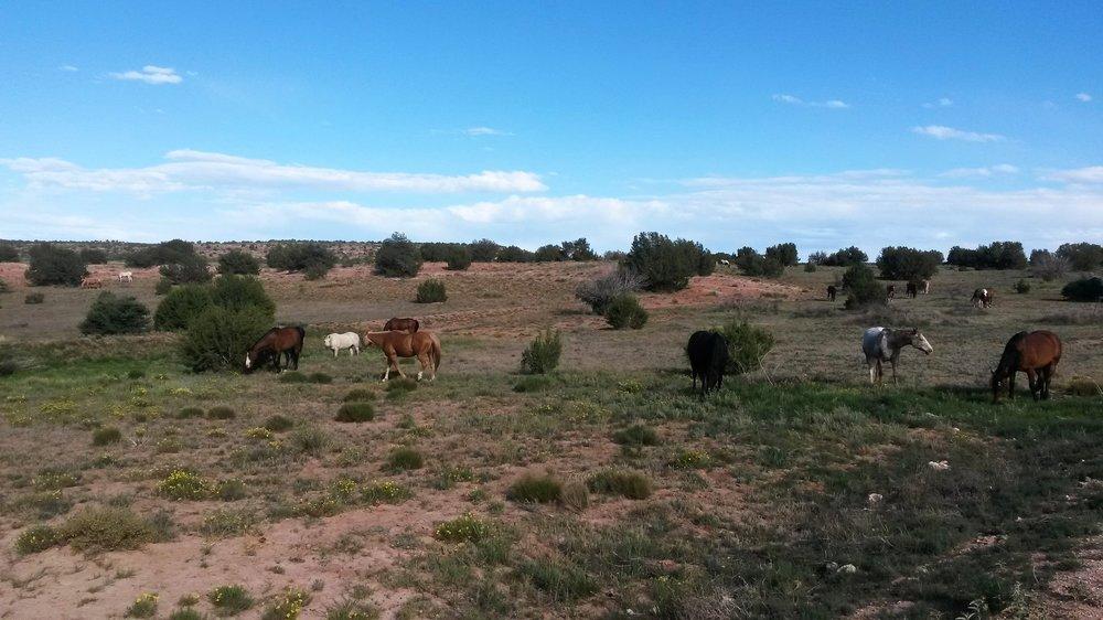 We and our happy horses say goodbye and see you in the next blog ;-)  Wir und unsere glücklichen Pferde sagen auf Wiedersehen und bis zum nächsten Blog ;-)