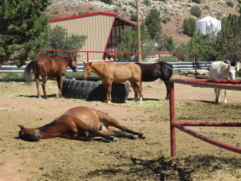 Our horses (like Hank is demonstrating )  love to take naps around noon ;-)  Unsere Pferde (wie Hank hier demonstriert) lieben es mittags zu schlafen ;-)