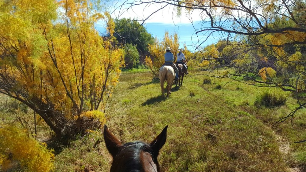 On a trail ride in the Carrizzo Creek (Andy on Snickers in front and Andrea on Walter in the back). The colors in the fall are sooo beautiful!  Auf einem Ausritt im Carrizzo Creek (Andy auf Snickers vorne und Andrea auf Walter dahinter). Die Farben im Herbst sind sooo wunderschön!