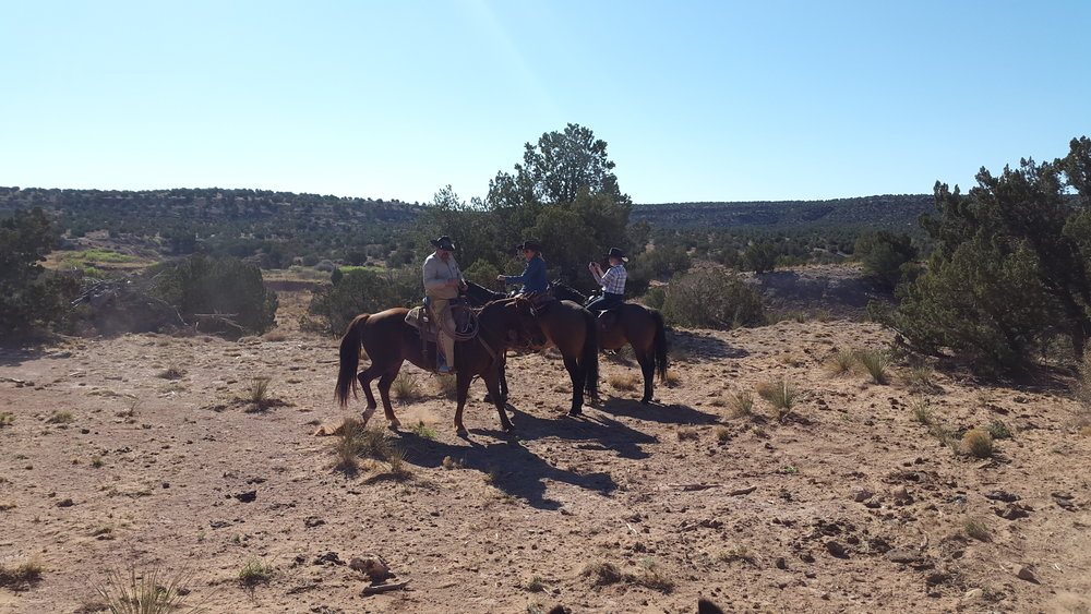 Part of our team meeting shortly before we push the cattle to the new pasture (left to right): Joe on Cowboy, Andrea on Kip and Kathrin on Gus.  Ein Teil unseres Teams trifft sich kurz bevor wir die Rinder in die neue Weide treiben (links nach rechts):  Joe auf Cowboy, Andrea auf Kip und Kathrin auf Gus.