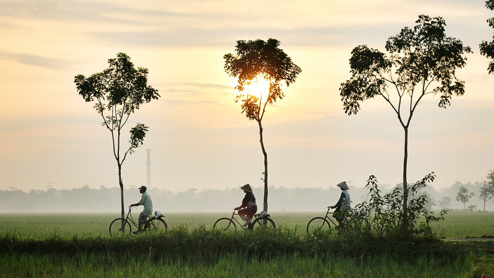 Balinese locals cycling through paddy fields