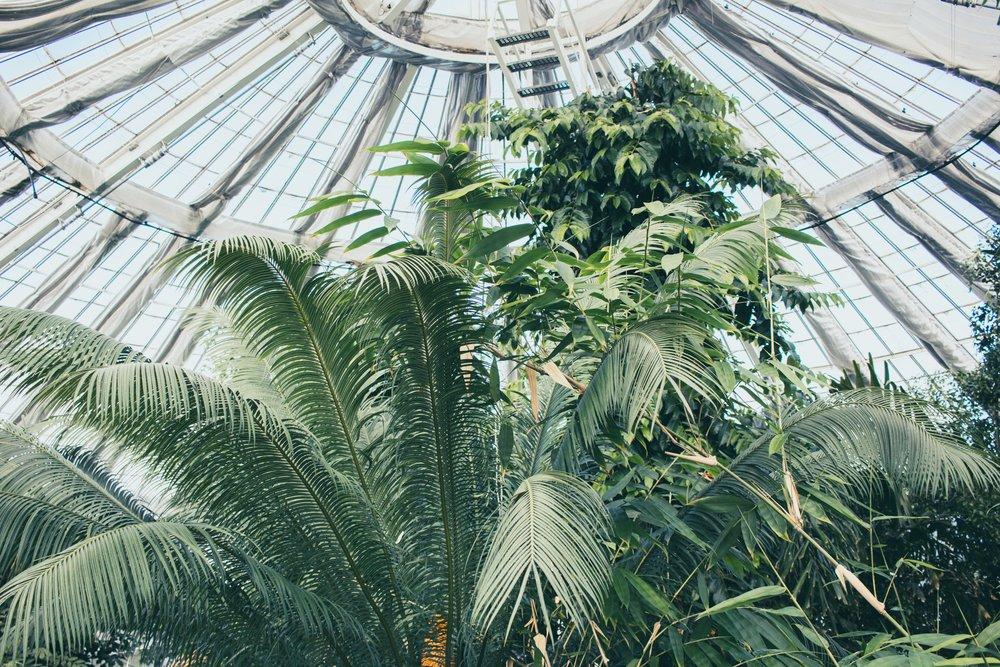 Copenhagen's Botanical Gardens, Denmark