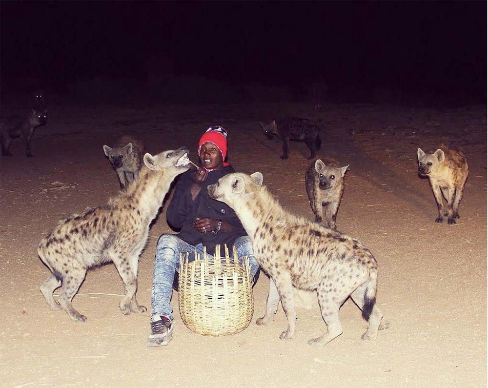 Hyena feeding in Harar, Ethiopia. Photo Credit: Katie Silcox.