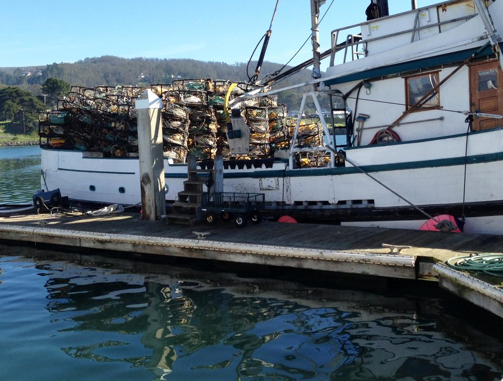Fishermen Struggle as Dungeness Crab Season Stays Closed   KQED's The California Report