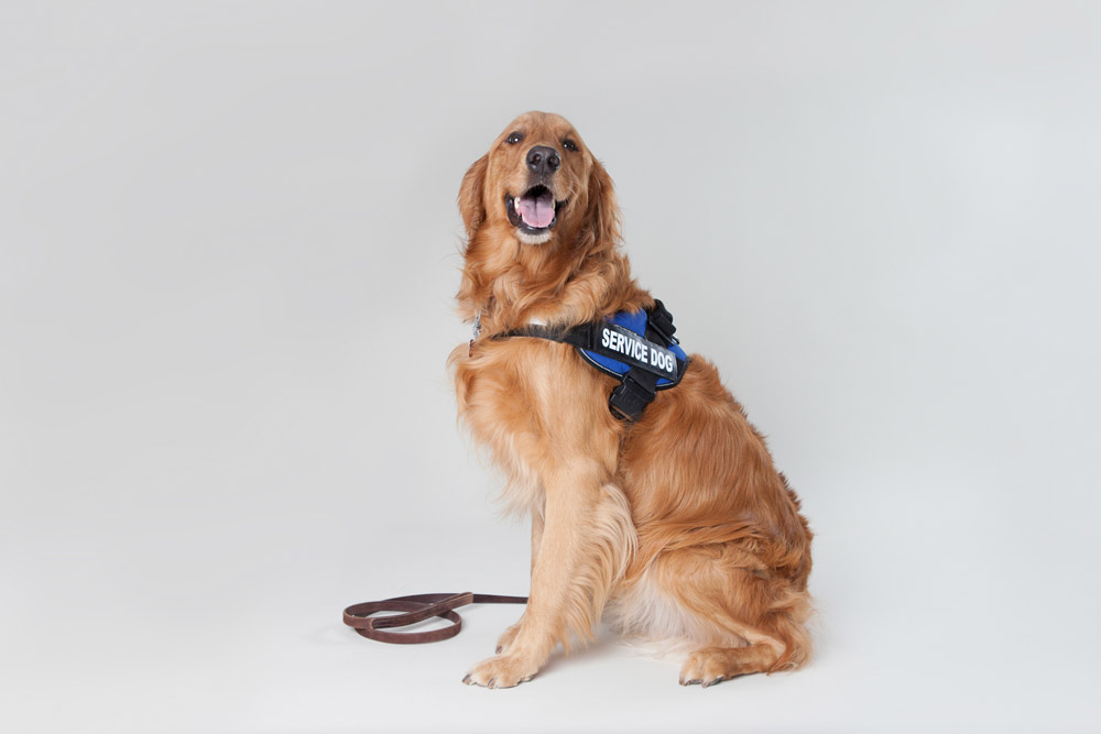 Specialized Training - Specialized training for service dogs / therapy dogs. Get your dog certified.