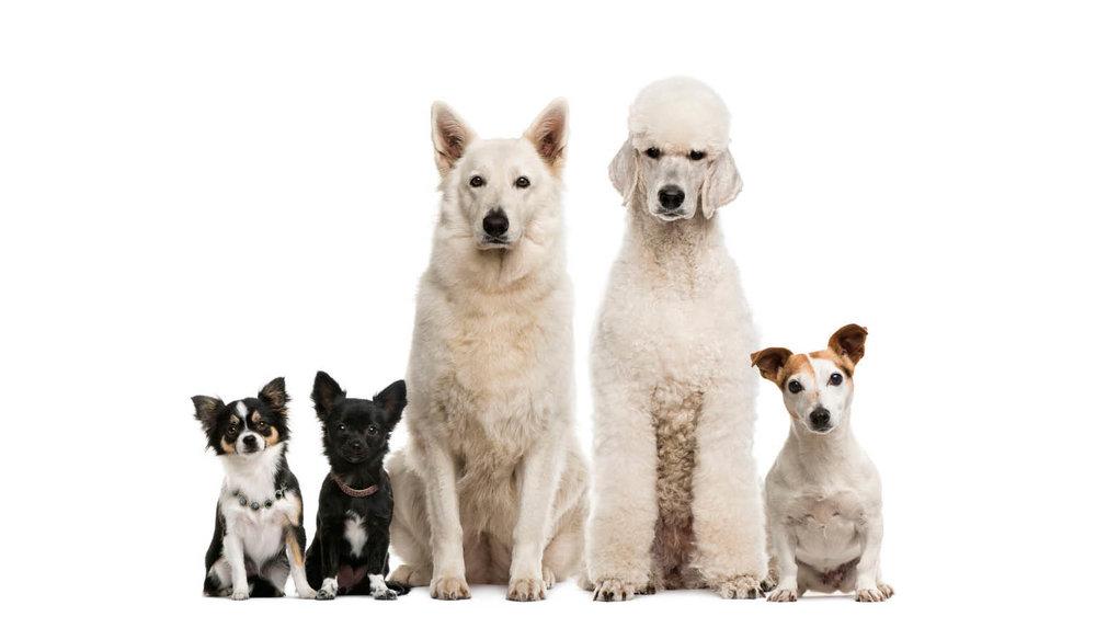 Perros Juntos - Pocos.jpg