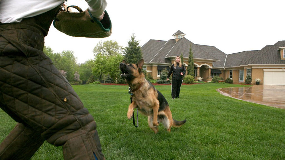 Protection Dog Training - Home Protection Dogs