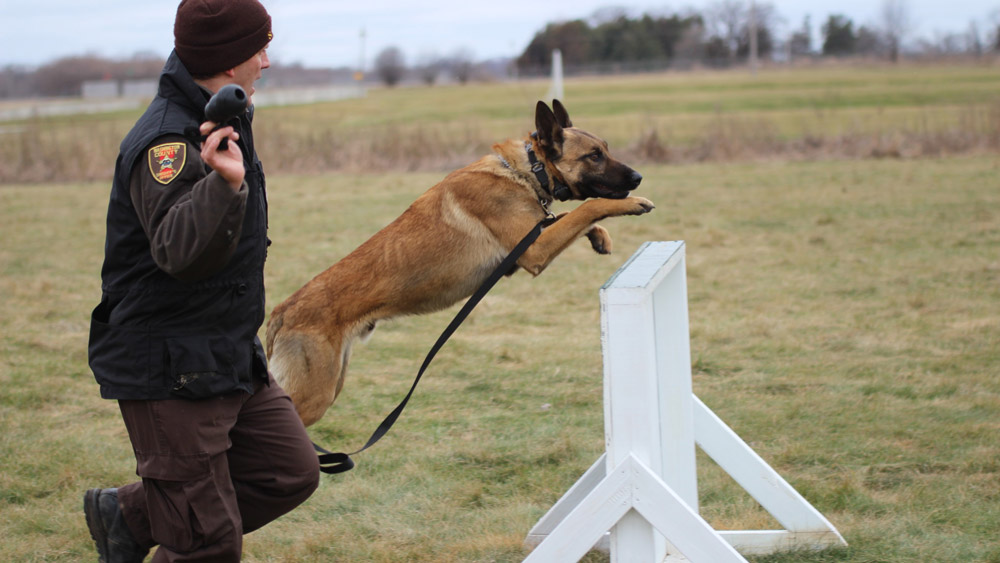 Sport Competition training - Schutzhund | PSA