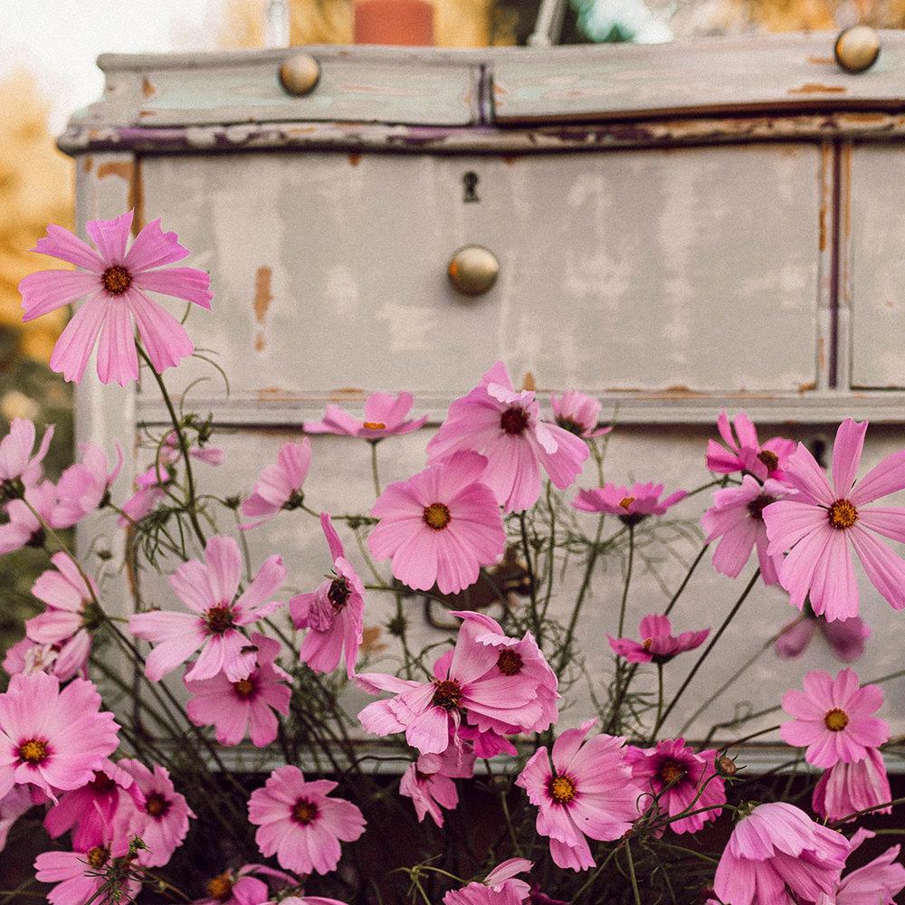 flowers-open.jpg