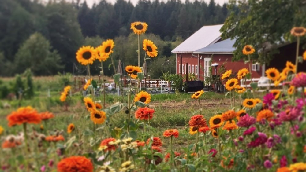 Our Farm - Five acres of organic heaven on Whidbey Island