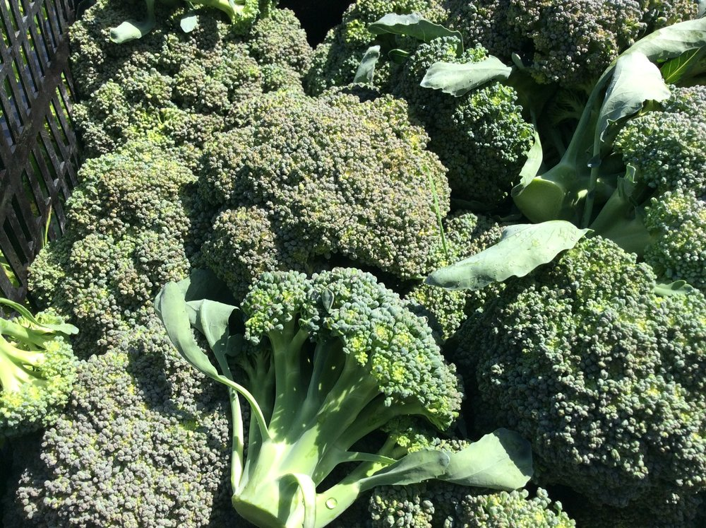 fresh broccoli orchard kitchen chef vincent.JPG