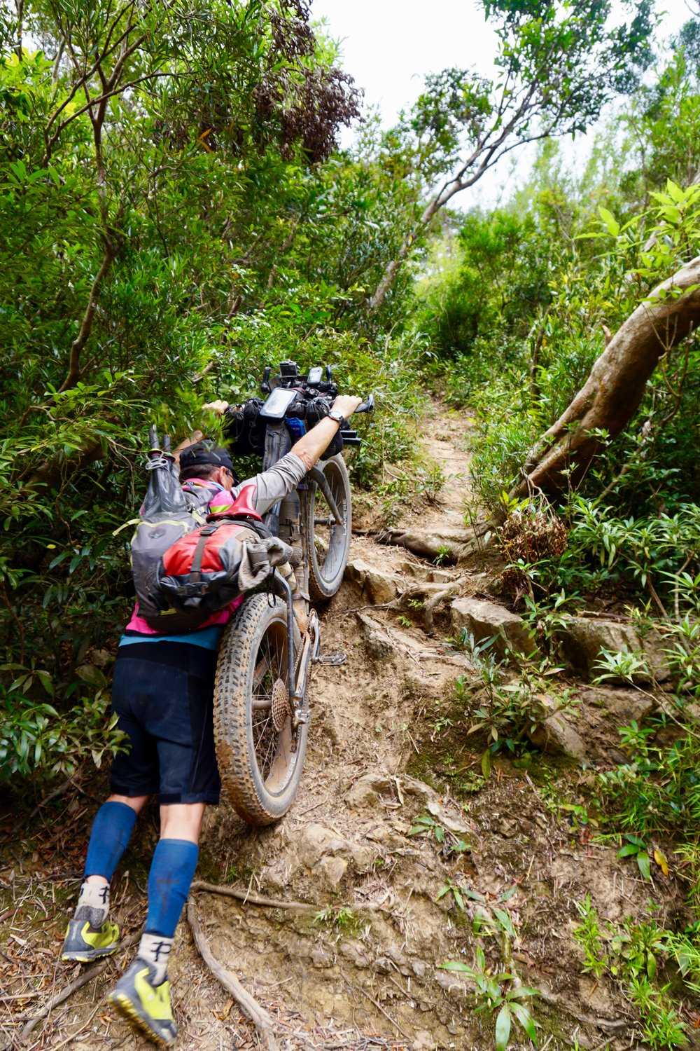 Ho Chi Minh Trail jungle