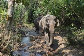 Ho Chi Minh Trail wildlife loa7.jpeg