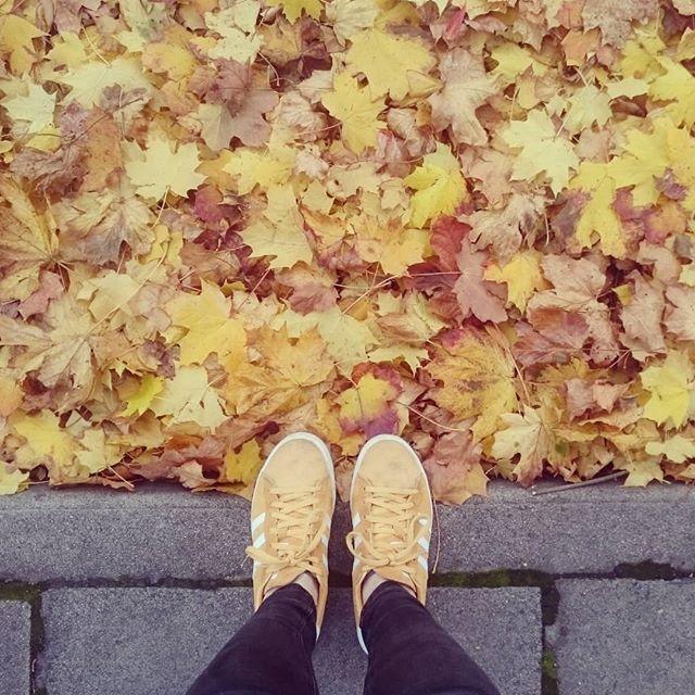 Matchy Matchy  #fridayfeels #yellow #autumnscotland #Iguessthesearedogwalkingshoesnow