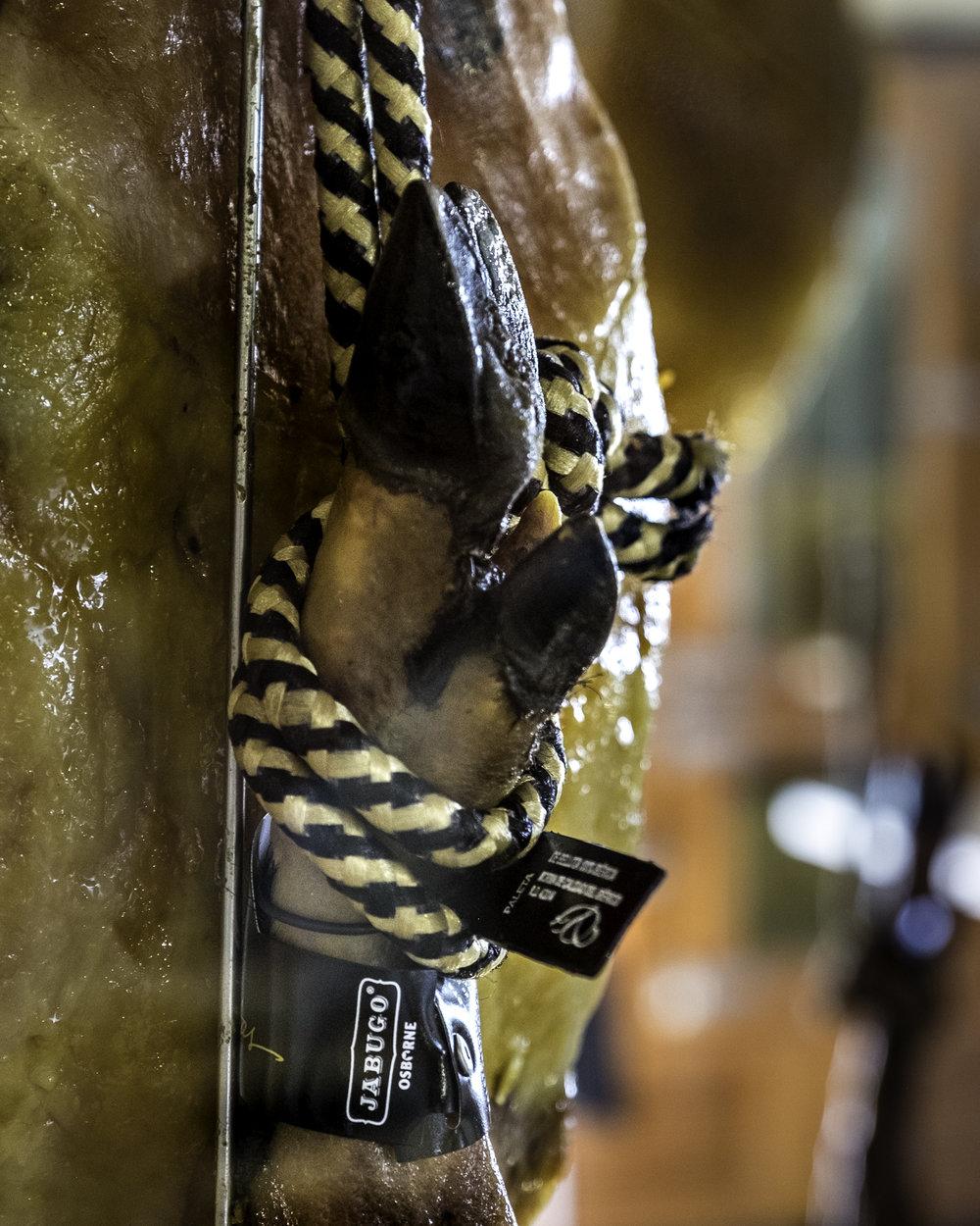 Pig's trotter - Jamon Iberico hanging, Jabugo