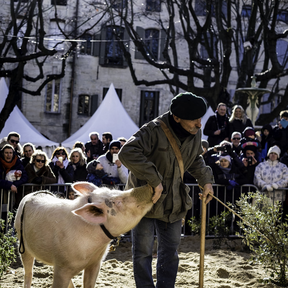 Truffle Hunter in Performance, Uzès
