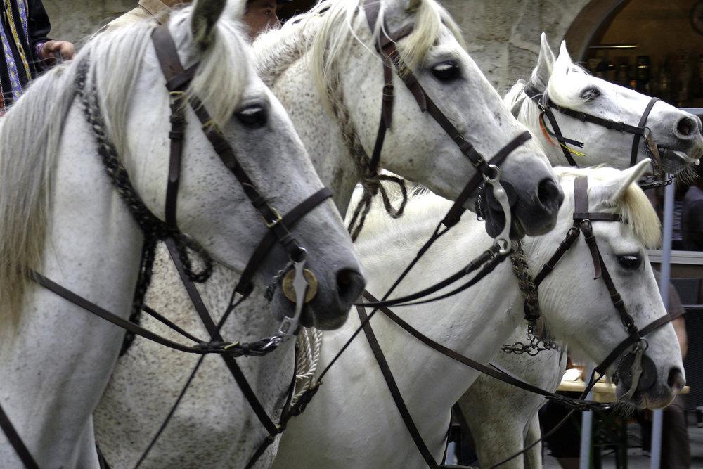 Camargue Horses, Uzès