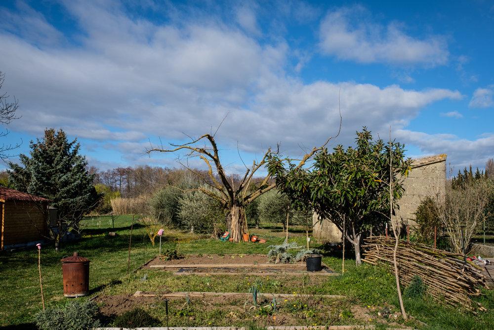 Garden Project - 6 - DSCF5844 copy.jpg