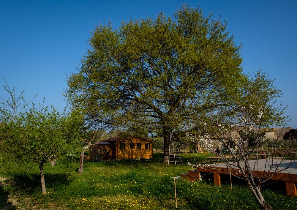 Garden Project - 40 - DSCF6097 copy.jpg