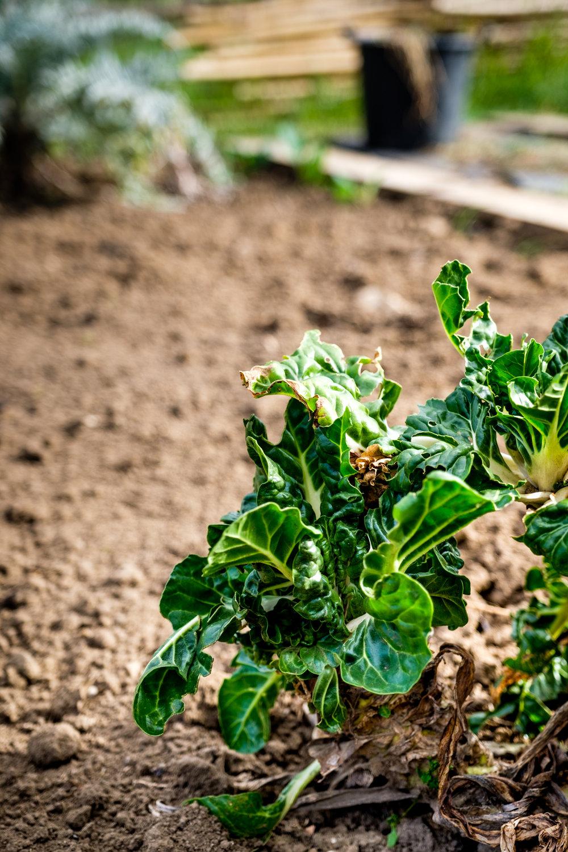 Garden Project - 10 - DSCF5813 copy.jpg