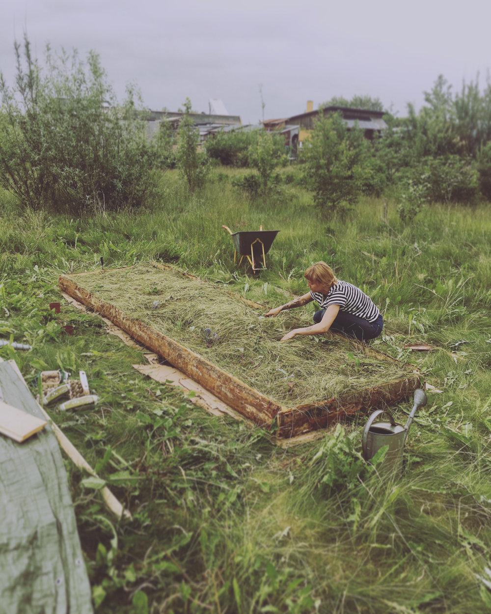 Jordforbedringsbedd med det vi har mye av - Poteter i gress, gress, gress...