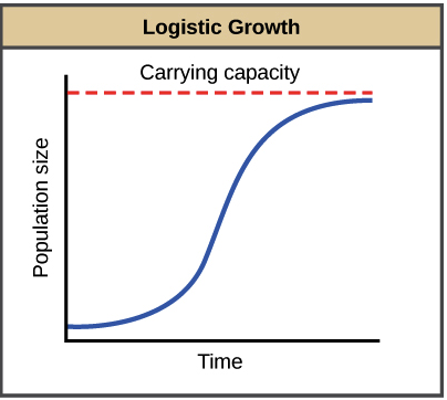 - Logistic growthIn logistic growth, the rate of growth of a population depends on the population's density. When the population size is small, the rate of growth is high. As population density increases, however, the rate of growth slows. Finally, when the population density reaches a certain point, the population stops growing and starts to decrease in size. Logistic growth is also described as
