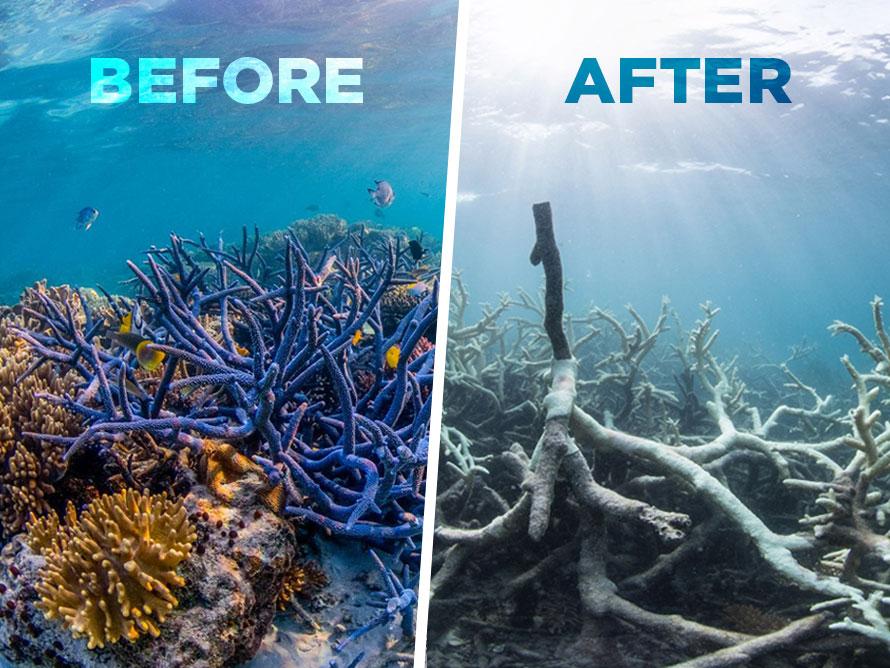 2016-06-09_corals.jpg