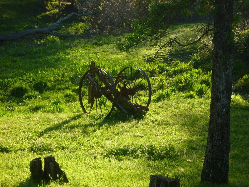 Wintun Ranch Carousel 26.jpg
