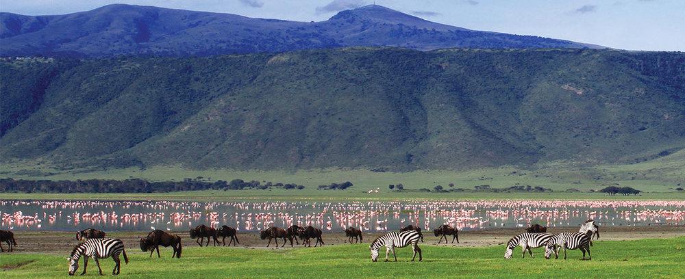 Africa-Tanzania-Ngorongoro-Crater-Zebras-and-Flamingos.jpg