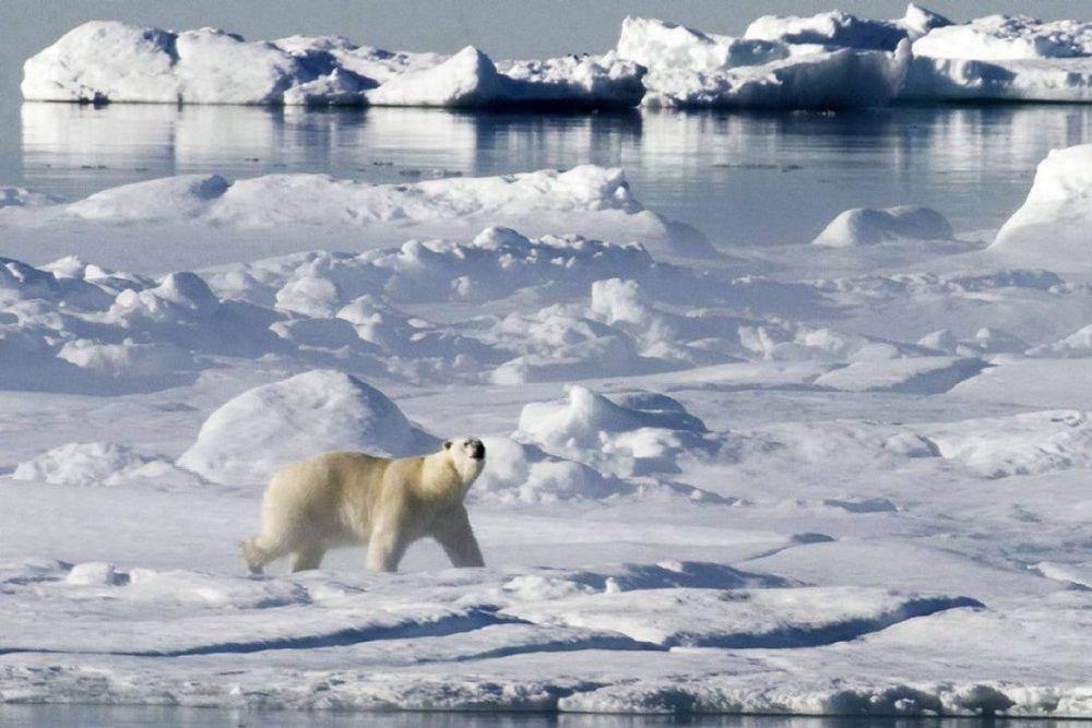 canadian arctic.jpg