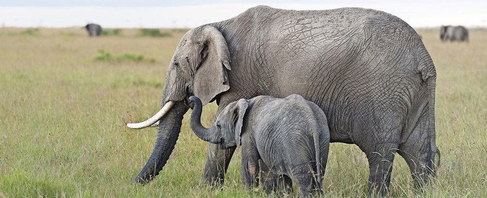 Africa-East-Africa-Kenya-Elephant.jpg