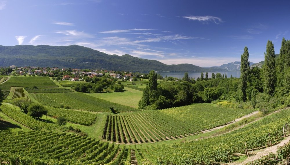 Brison-Saint-Innocent-vineyard.jpg