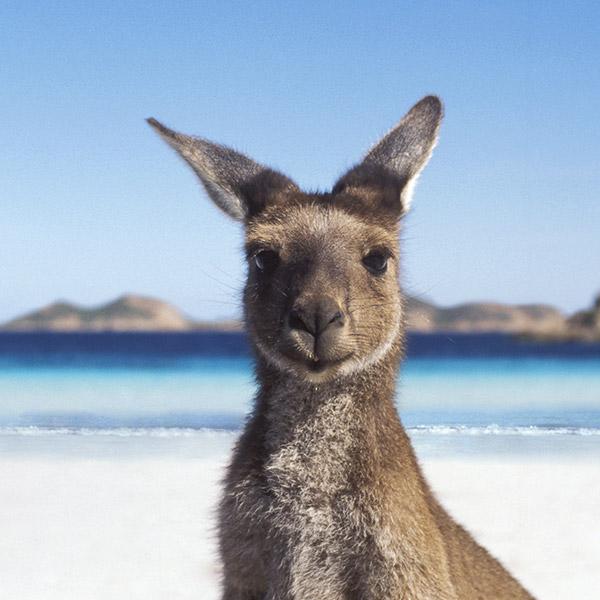6.  AUSTRALIAN ADVENTURES