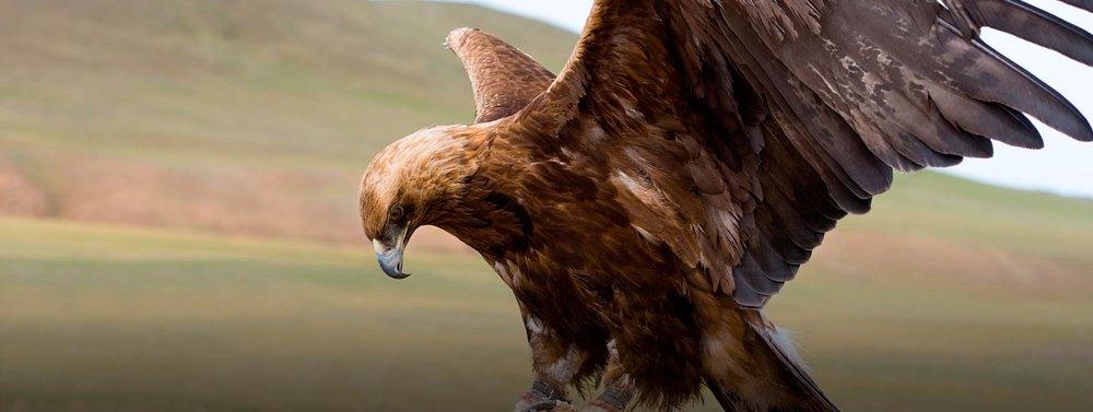 golden-eagle-festival-featured-full-1500-x-566.jpg