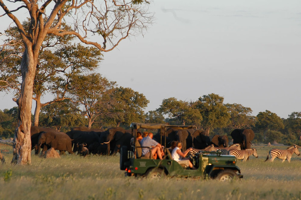ACTIVITIES? - 1. Widlife activities during the stay at Kanga Camp and Zambezi Expeditions2. Two safari activities per day