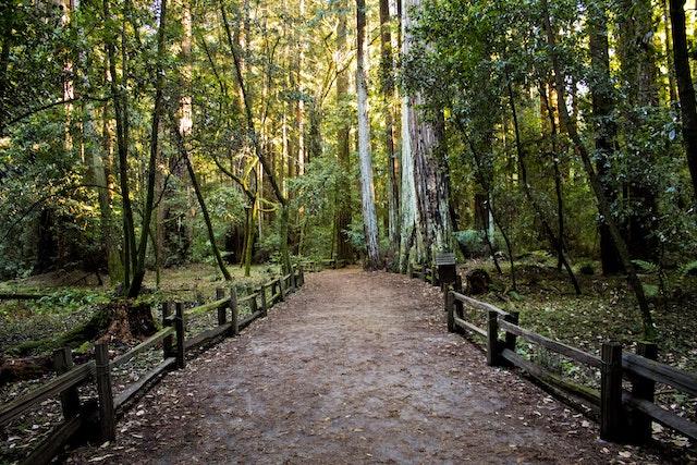 Forest Path.jpeg