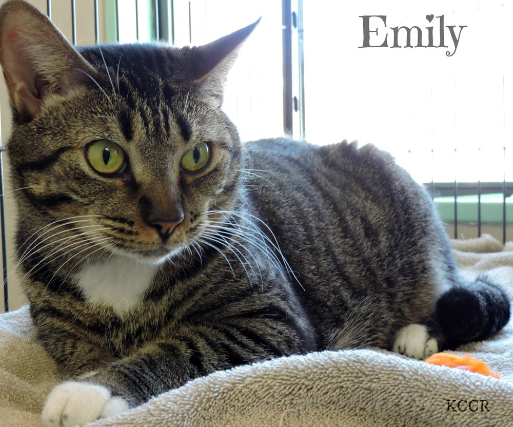 Emily - ADOPTED! -