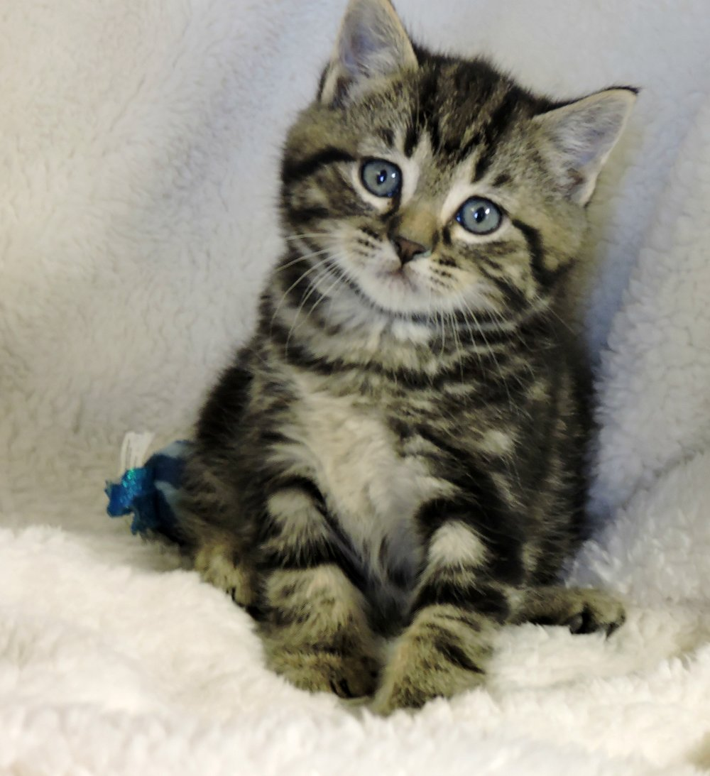 Mystery - ADOPTED! -