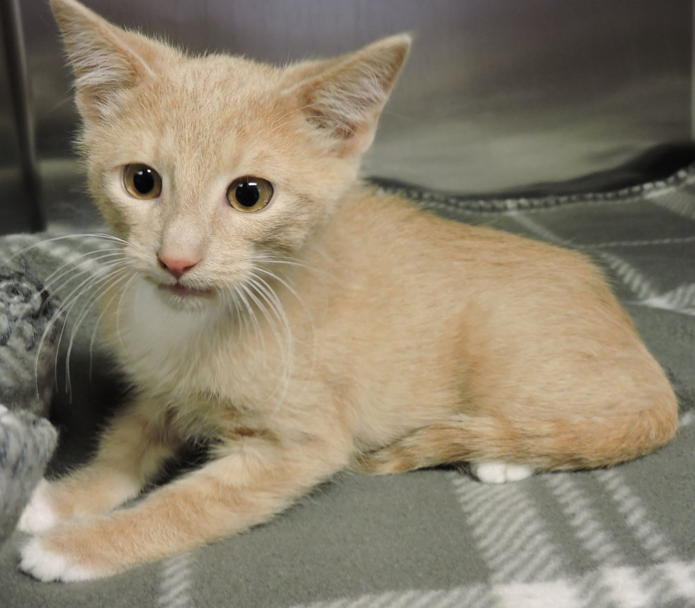 Timothy - ADOPTED! -