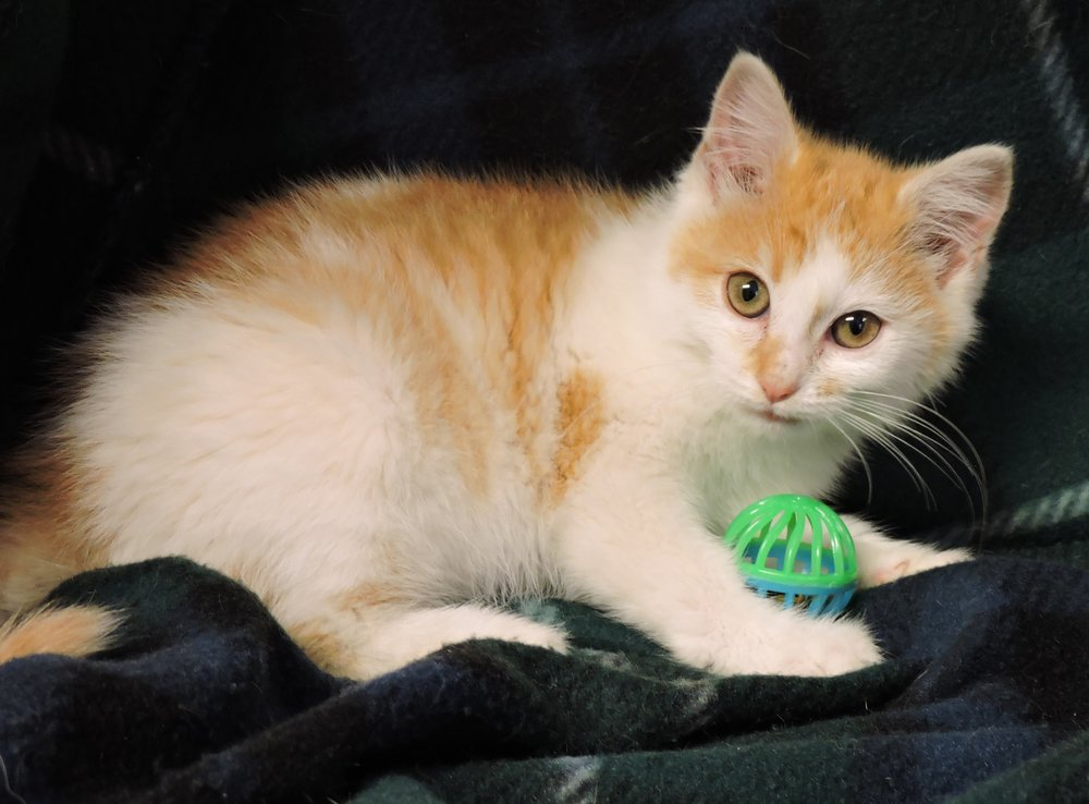 Heinz - ADOPTED! -